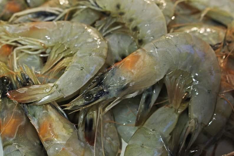 How To Catch Live Shrimp For Bait